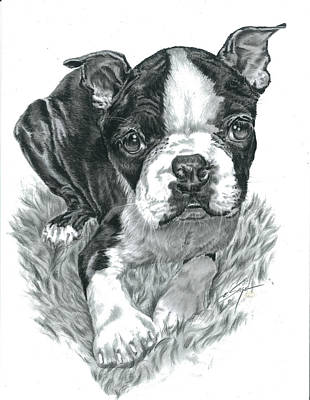 Whippet Digital Art - Boston Terrier Puppy by Elizabeth Sage