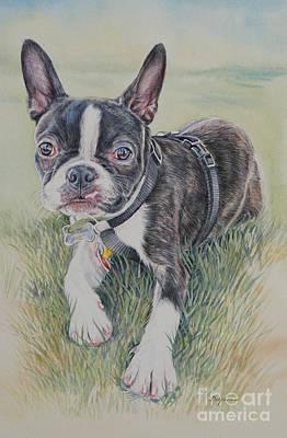 Boston Terrier Puppy Art Print by Gail Dolphin