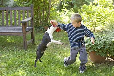 Toy Terrier Photograph - Boston Terrier With Boy by Jean-Michel Labat