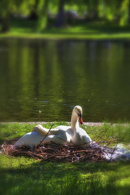 Boston Public Garden Photograph - Boston's Romeo And Juliet Swans by Joann Vitali