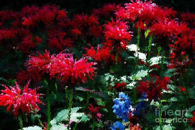 Organic Photograph - Botanic Garden Abstract by Nancy Mueller