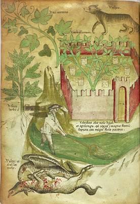 Botanical And Animal Illustration Print by British Library