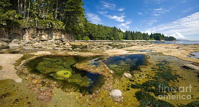 Juan De Fuca Provincial Park Photograph - Botanical Beach by Matt Tilghman