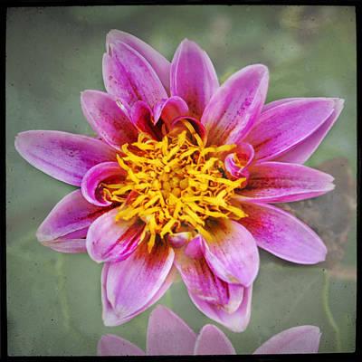 Eduardo Tavares Photo Royalty Free Images - Botanical Explosion 3 Royalty-Free Image by Eduardo Tavares