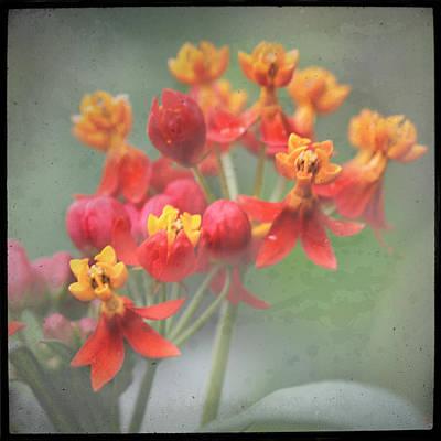 Photograph - Botanical Explosion 5 by Eduardo Tavares