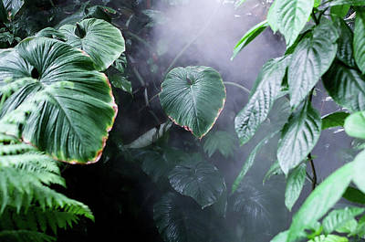 Botanical Photograph - Botanical Gardens by Bjorn Houtman