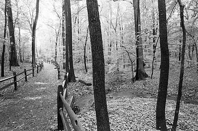 Photograph - Botanical Gardens Trail by Dave Beckerman