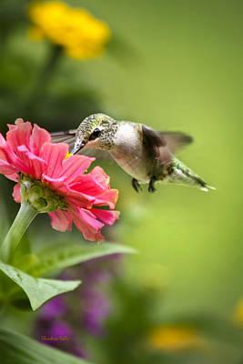 Botanical Hummingbird Art Print