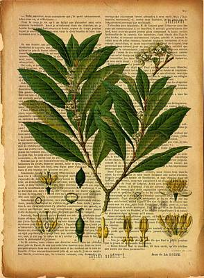 Digital Art - Botanical Print On Old Page 2 by Lilia D