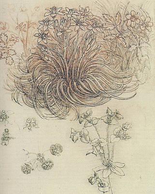 Botanical Study Art Print by Leonardo da Vinci