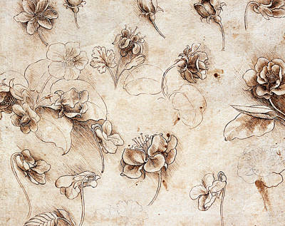Still Life Drawing - Botanical Table by Leonardo Da Vinci