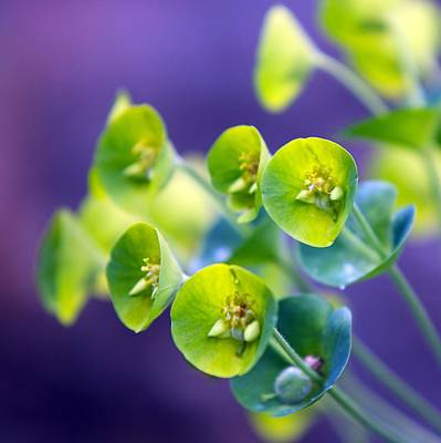 Photograph - Botanical by Tim Nichols