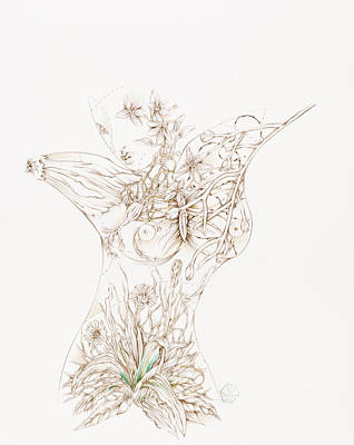 Drawing - Botanicalia Joycelyn by Karen Robey