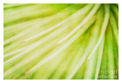 Photograph - Botanicals Greens 3 by Lenny Carter