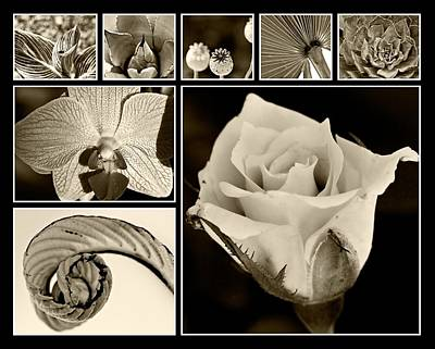 Photograph - Botanicals In Brown by Melinda Ledsome