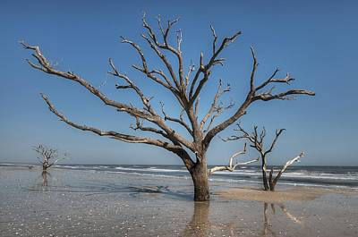 Botany Bay And Edisto Beach Art Print