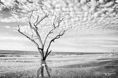 Photograph - Botany Bay Beauties B/w by Peg Runyan