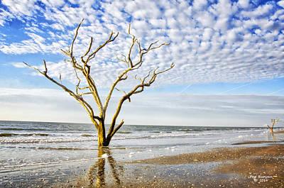 Photograph - Botany Bay Beauties by Peg Runyan