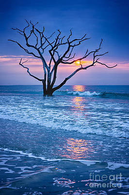 Botany Bay Sunrise 2 Art Print by Carrie Cranwill