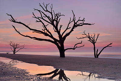 Botany Bay Trees Art Print