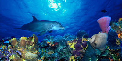 Angelfish Photograph - Bottle-nosed Dolphin Tursiops Truncatus by Panoramic Images