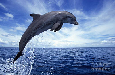 Photograph - Bottlenose Dolphin by Francois Gohier