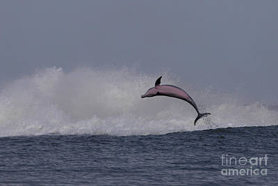 Bottlenose Dolphin Photo Art Print