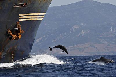 Bottlenose Dolphins Playing Art Print