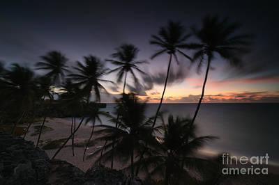 Palm Photograph - Bottom Beach At Dawn Barbados Caribbean by Matteo Colombo