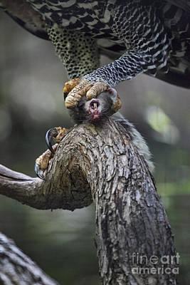 Eagle Photograph - Bottom Of The Food Chain by Douglas Barnard