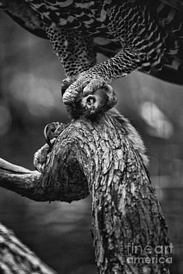 Eagle Photograph - Bottom Of The Food Chain V2 by Douglas Barnard