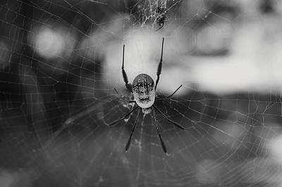 Golden Orb Photograph - Bottoms-up 2 by Leana De Villiers