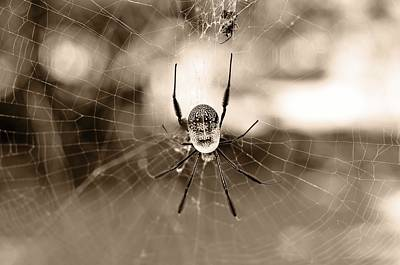 Golden Orb Photograph - Bottoms-up 3 by Leana De Villiers
