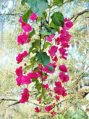 Photograph - Bougainvillea 3 by Judy Via-Wolff