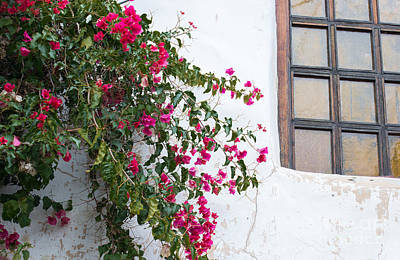 Photograph - Bougainvillea At Carmel Mission by Suzanne Luft