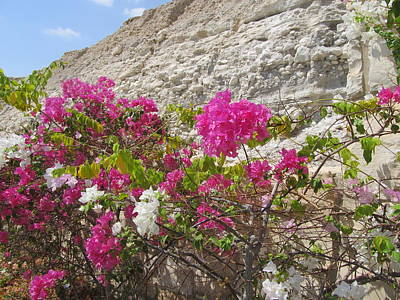 Photograph - Bougainvillea At The Dead Sea by Esther Newman-Cohen