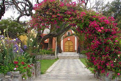 Photograph - Bougainvillea Entrance by Lew Davis