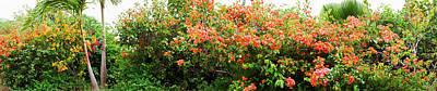 Bougainvilleas Photograph - Bougainvillea Flowers In Garden, St by Panoramic Images