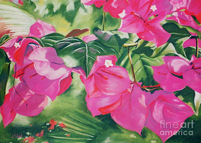 Bougainvillea Painting - Bougainvillea by John Clark