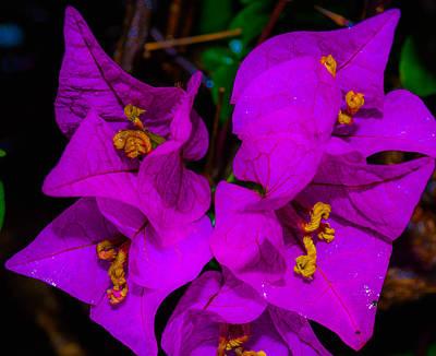 Photograph - Bougainvillea Matte Touch by Lisa Cortez
