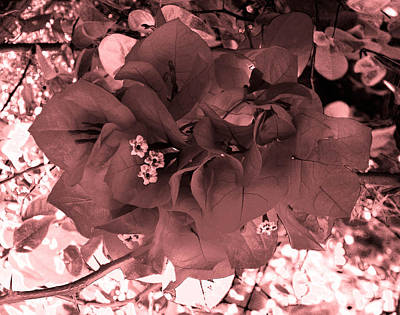 Bougainvillea Monochrome Art Print by Christy Usilton
