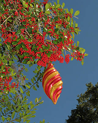 Photograph - Boughs Of Holly by Peg Urban