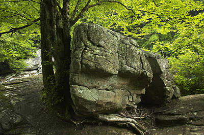 Photograph - Boulder And Tree by Byron Jorjorian