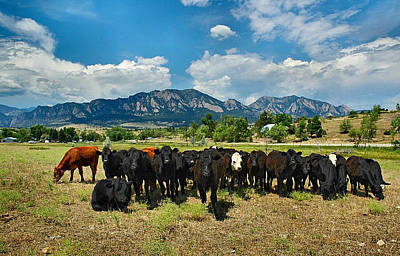 Photograph - Boulder Beef by Lynn Bauer