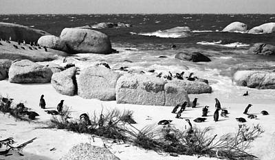 Photograph - Boulders And Penguins by Karen E Phillips