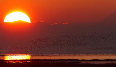 Photograph - Boundary Bay Sunrise by Shari Sommerfeld