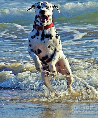 Dalmatian Photograph - Bounding Happiness by Blair Stuart
