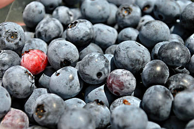 Art Print featuring the photograph Bountiful Blueberries by Kelly Nowak