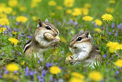 Chipmunk Photograph - Bountiful Generosity by Christina Rollo