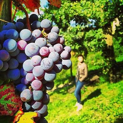 Grape Photograph - Bountiful by Jonathan P